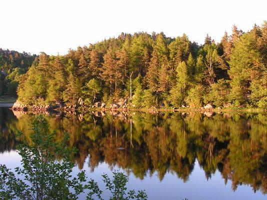 Gespiegelter Wald, absolut ruhiges Wasser