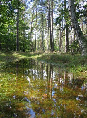 Gespiegelter Wald