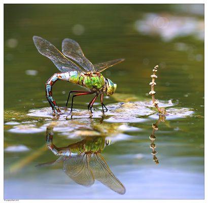 Gespiegeltes Insektenleben