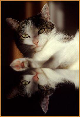 gespiegeltes Katzenportrait
