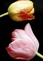 Gespräch unter Tulpen