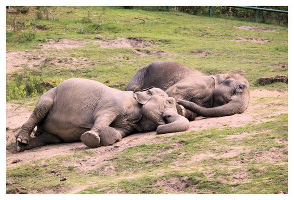 gestapelte Elefanten