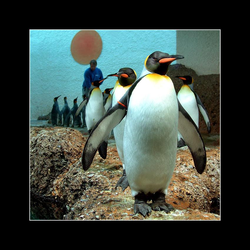 Gestatten: seine Majestät König der Pingus