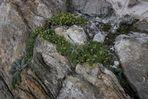 Gestein und Pflanzen
