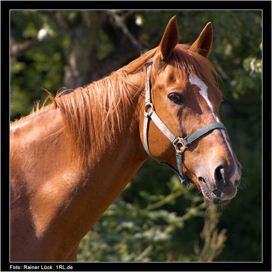 Gestern am Pferdehof 1
