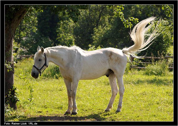 Gestern am Pferdehof 2