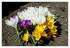 Gestern fand der Frühling statt