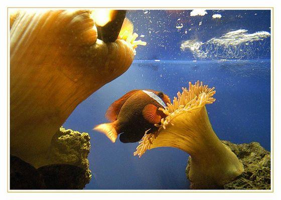 Gestern im Aquarium