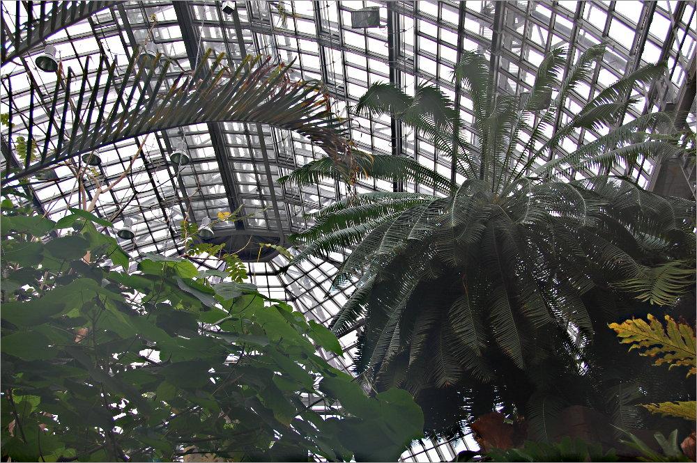 gestern im Botanischen Garten