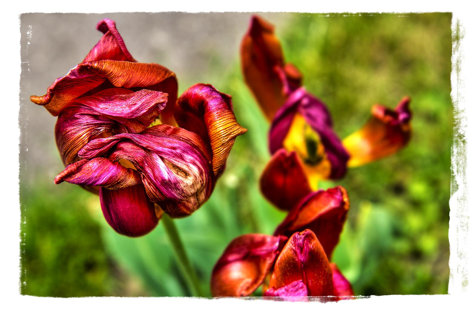 Gestern im Garten