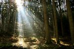 Gestern im Wald...