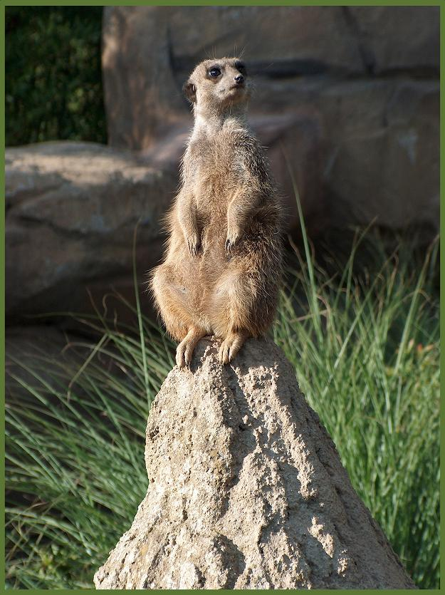 gestern im Zoo