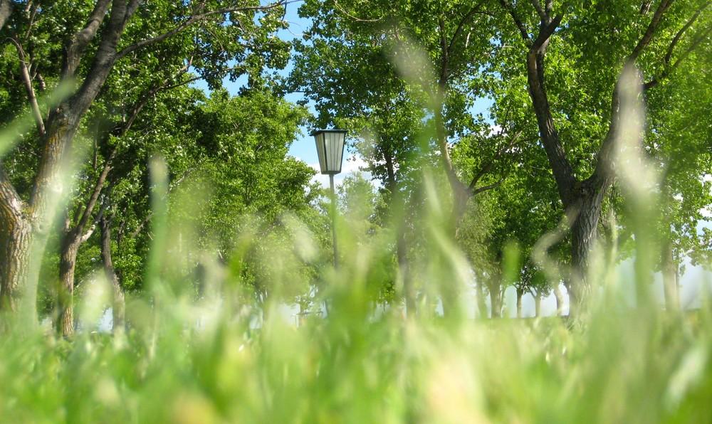 Gestern SAH ich das Gras wachsen... ;)