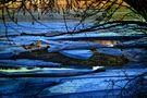 Gestrandetes Eis Lichtspiegelung von Gallus Pictures present
