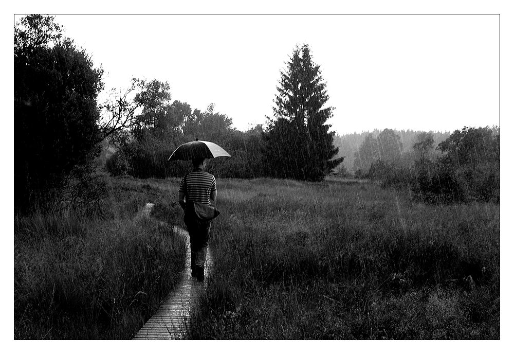 Gestreift im Regen