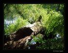Gestürzter Baum II