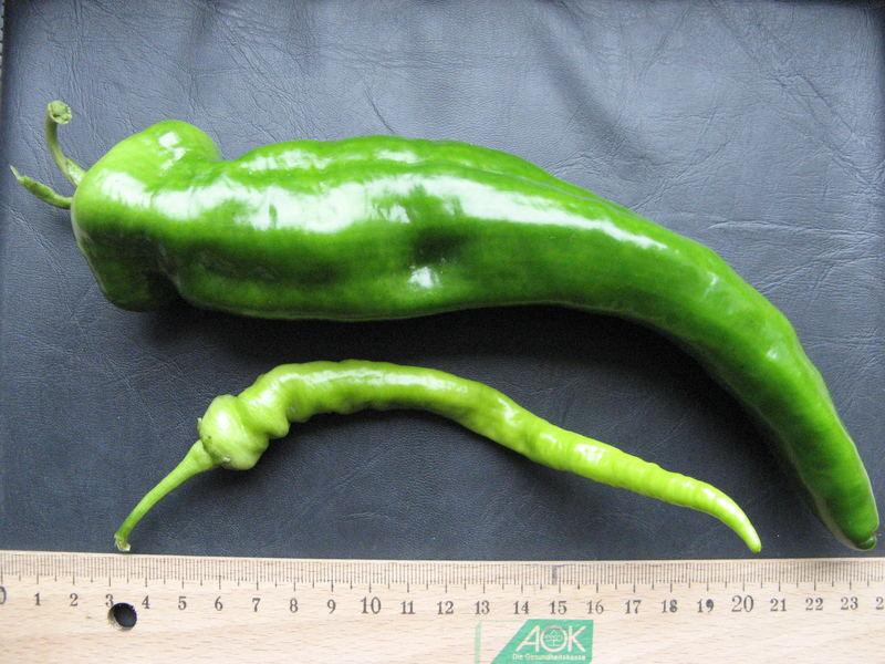 Gesuntes Scharfes Gemüse