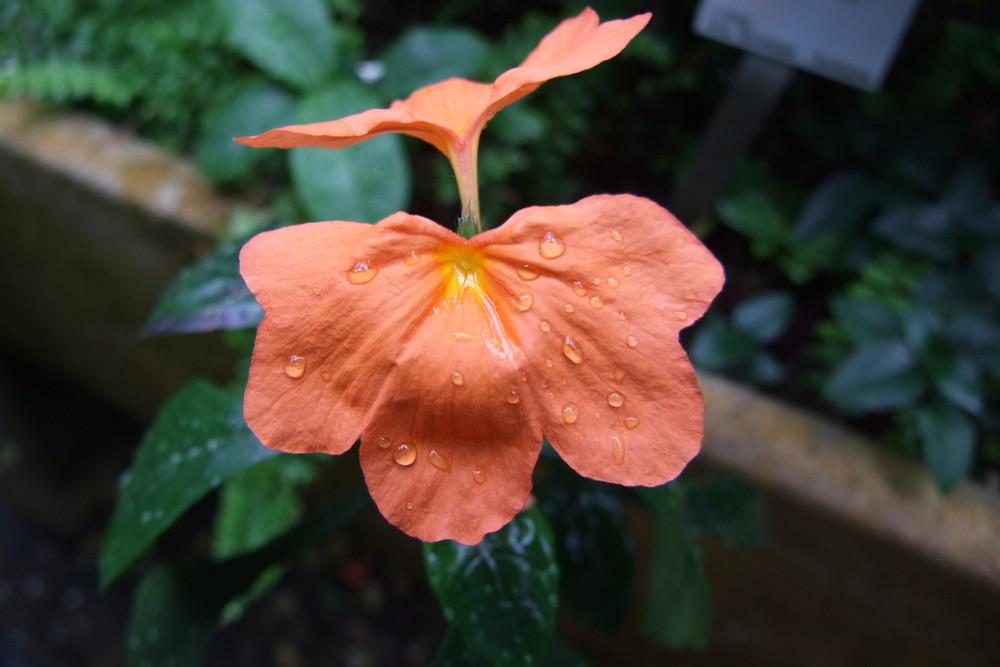 Geteilte Blüte