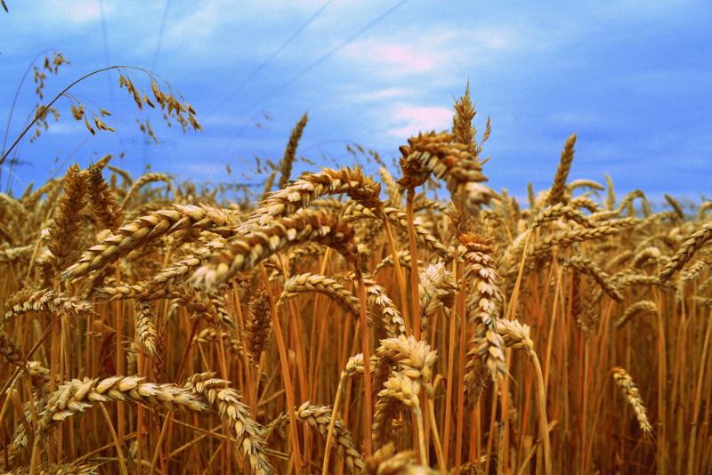 Getreide 1.0
