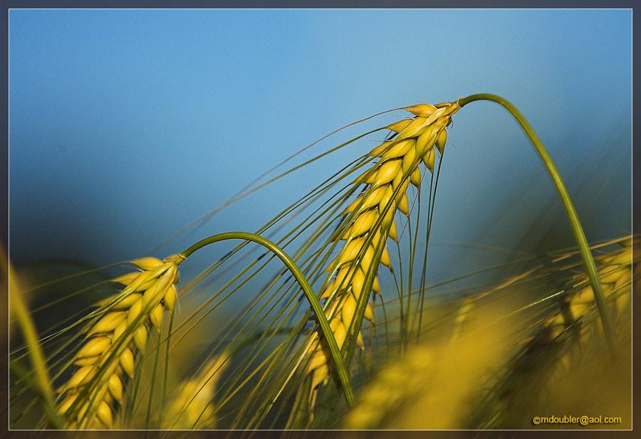 Getreide [5]