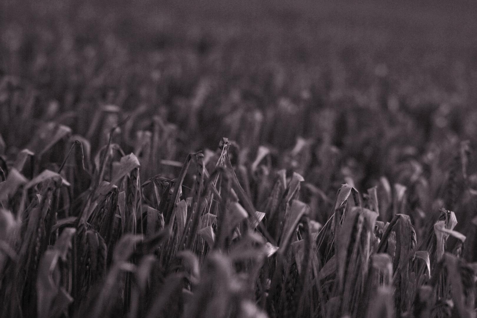 Getreide ..