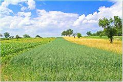 Getreidebahn