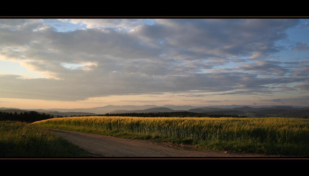 Getreidefeld in der Abendsonne / Grain field shone resplendent in the evening sun