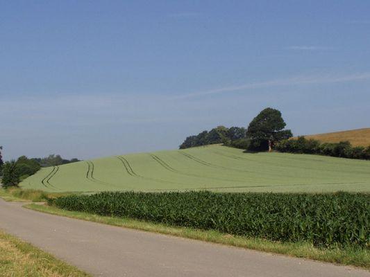 Getreidefeld in Form gebracht