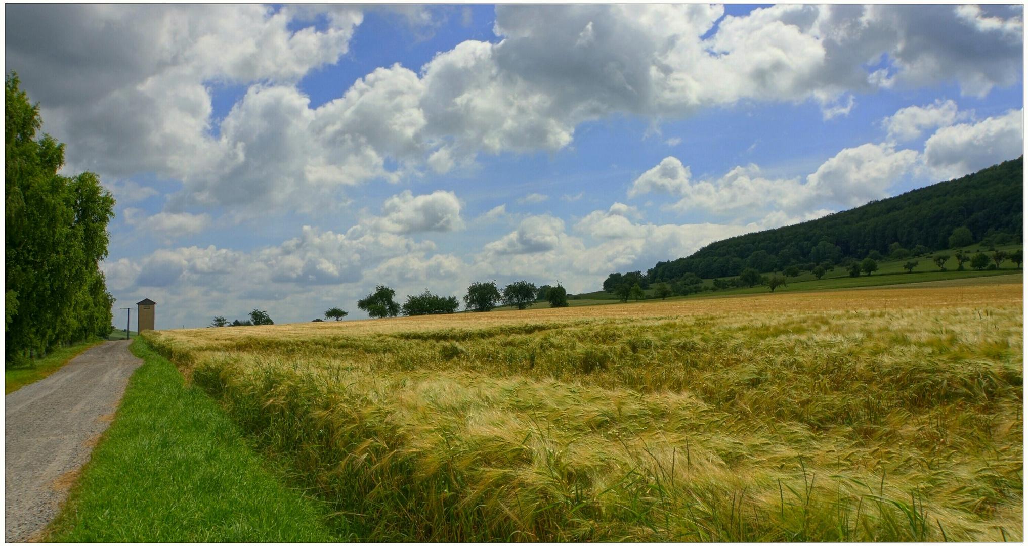 Getreidefeld VI (campo de cereales VI)