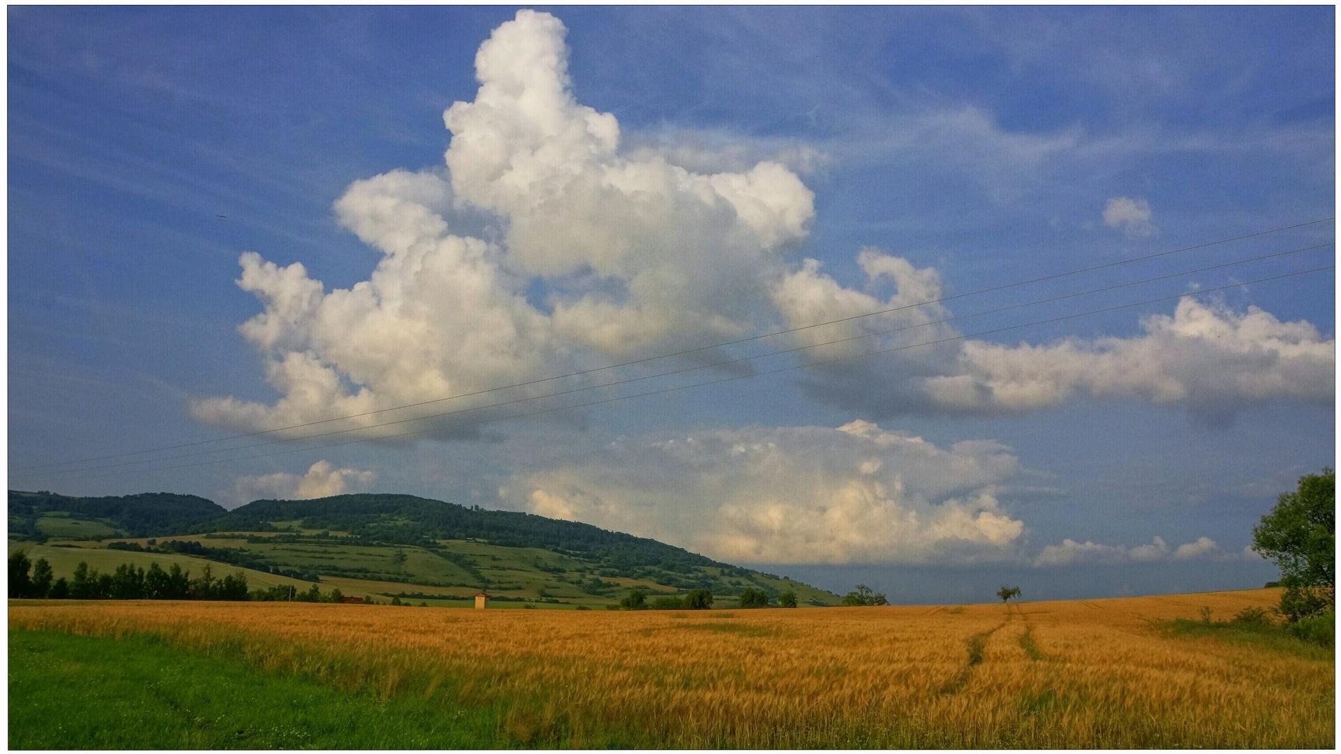 Getreidefeld VIII (campo de cereales VIII)