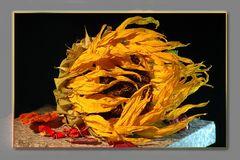 Getrocknete Sonnenblume - feurig schön