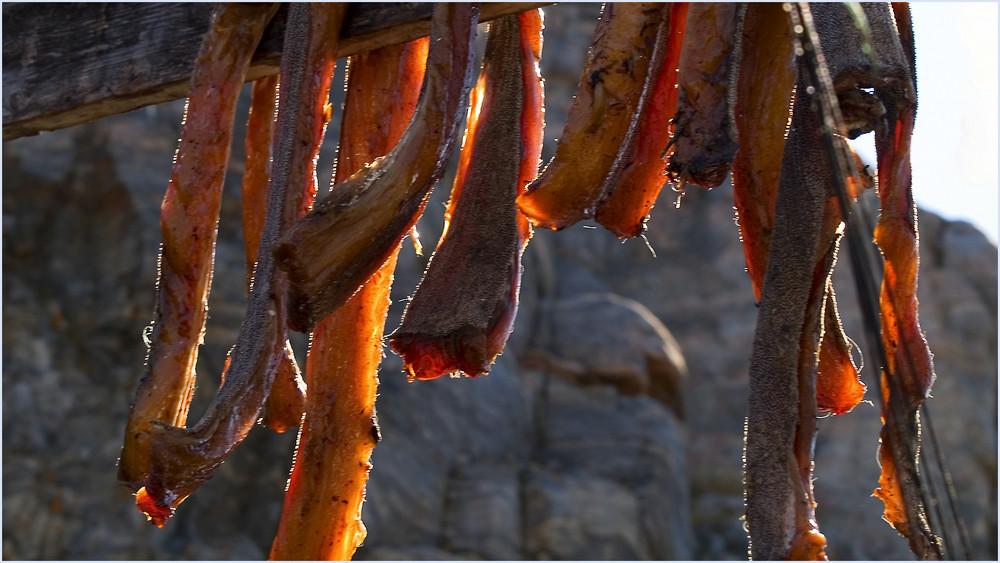 Getrockneter Fisch ist das Futter für die Schlittenhunde