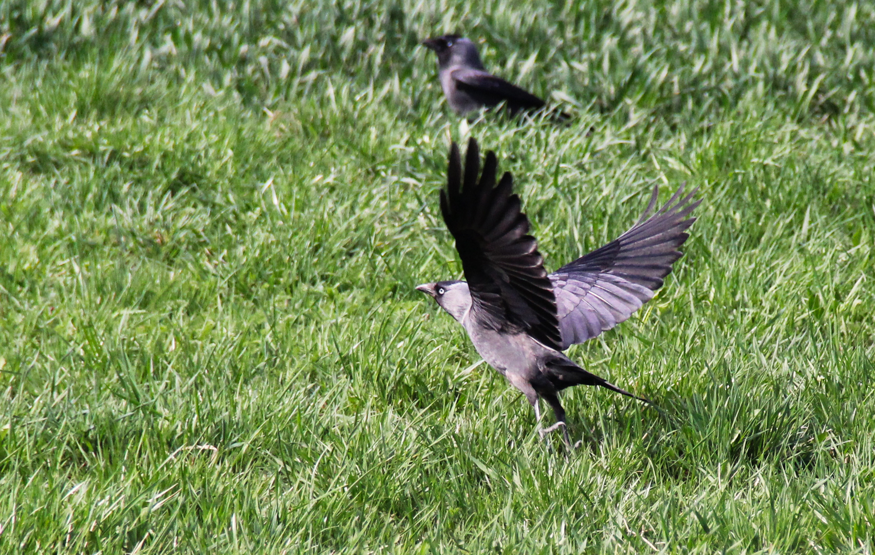 Getting it started