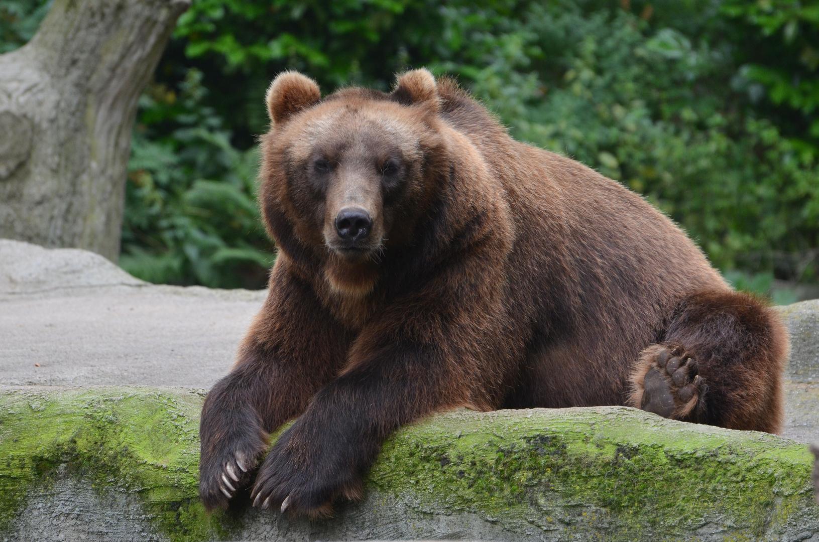 Gevatter Bär