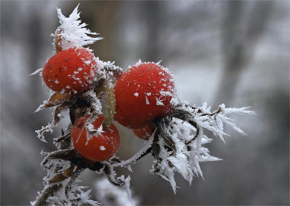 Gevatter Frost