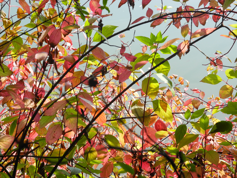 Gewebe von Blättern
