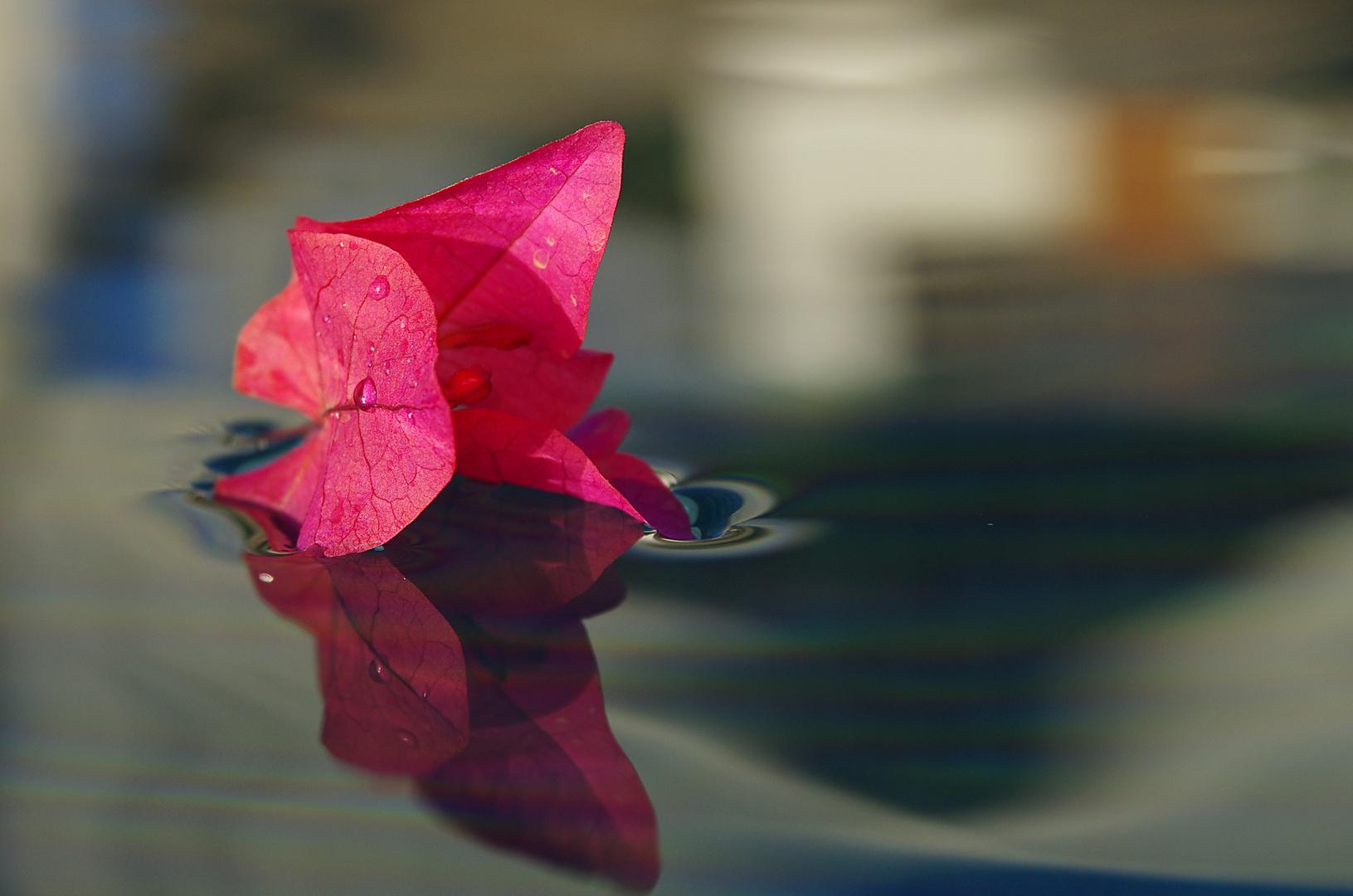 Gewicht einer zarten Blüte