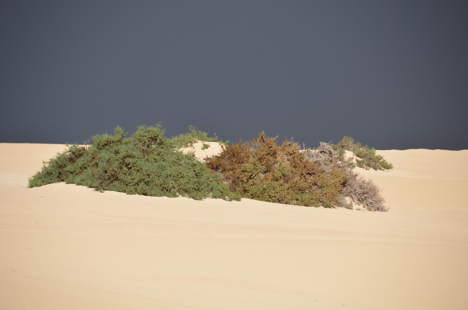 Gewitter in den Dünen
