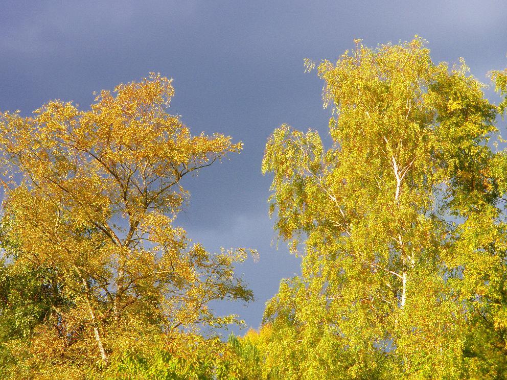 Gewitterhimmel mit Bäumen