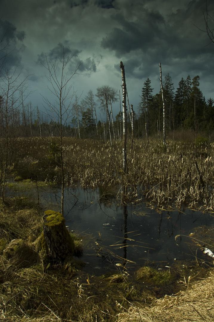 Gewitterstimmung im Rotter Forst
