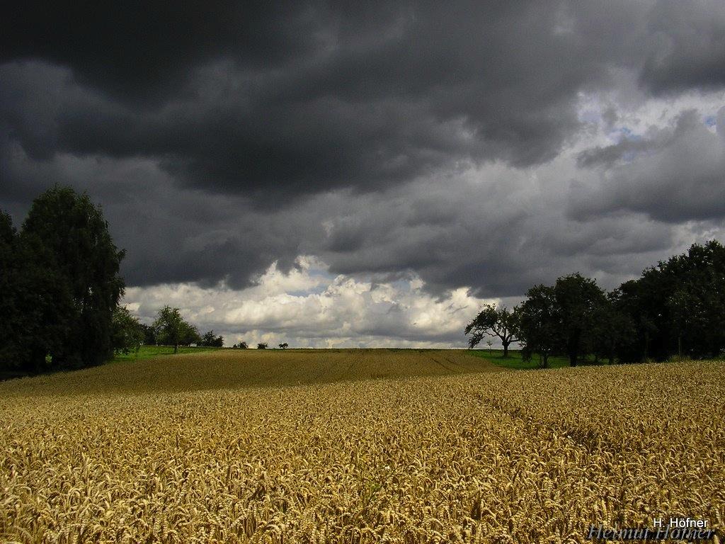 Gewitterwolken über Getreidefeld