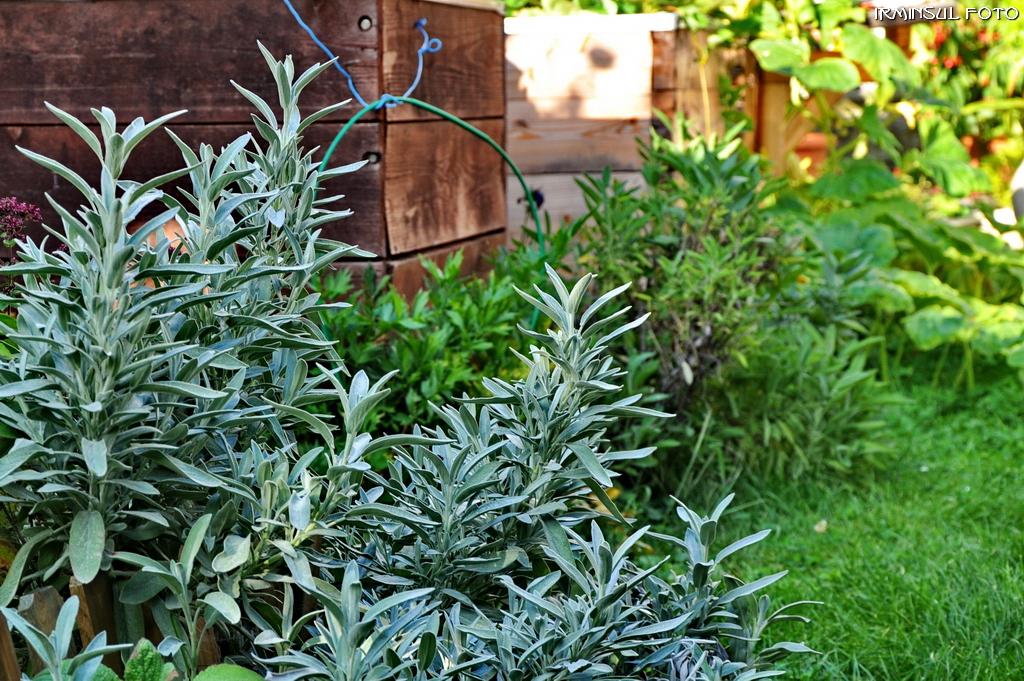 gew rze im garten foto bild pflanzen pilze flechten bl ten kleinpflanzen pflanzen. Black Bedroom Furniture Sets. Home Design Ideas