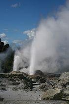 Geysir in Te Puia III