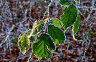 Gezuckerte Blätter