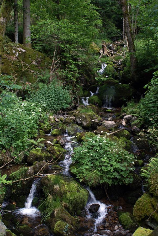 Gfällbach im Simonswälder Tal (Schwarzwald)