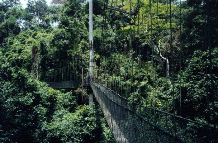 Ghana Regenwald