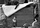 Ghetto Cats