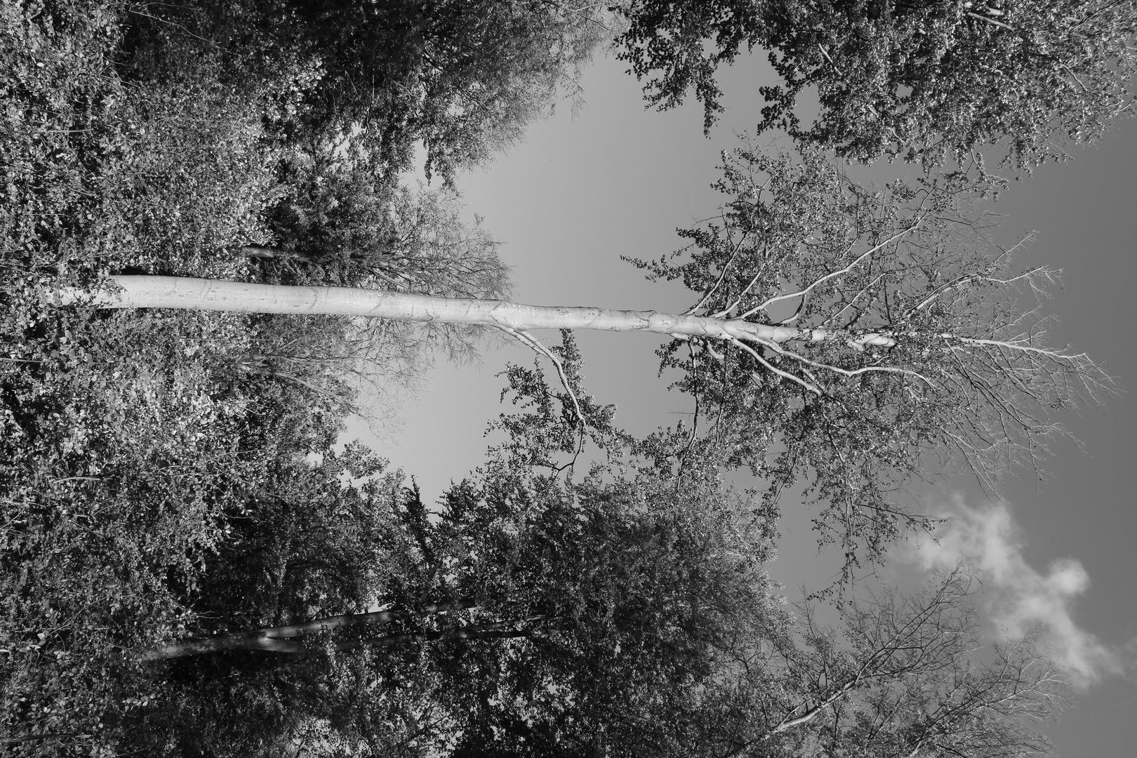 Ghost-Tree