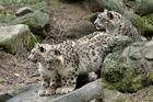 Ghurl mit ihren Kätzchen