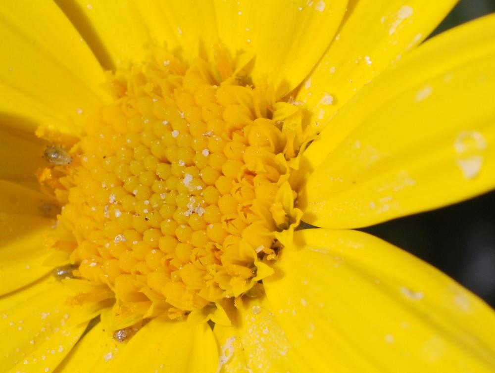 ..........giallo..........